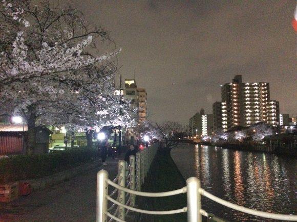大阪城東区桜
