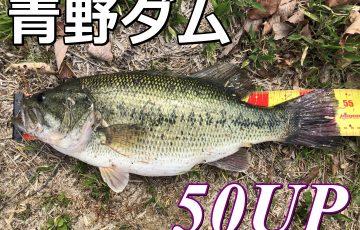 青野ダム50アップバス