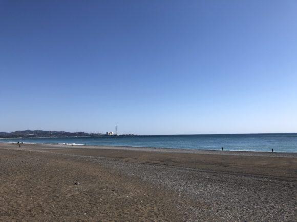 煙樹ヶ浜のサワラ